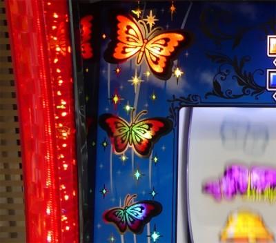 蝶々 ver 育ち 南国